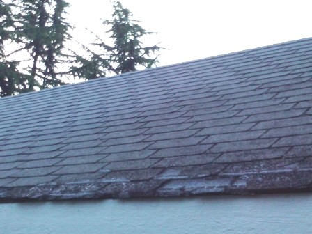 Roof Damage Repair – Why You Might Need a New Roof